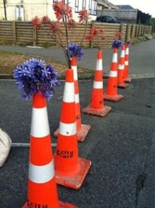 A Christchurch tribute: agapanthus in traffic cones line the streets each year