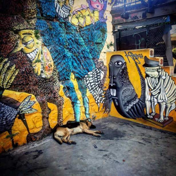 A sleeping pooch rests among the street art